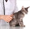 Ветеринарные клиники в Верхних Татышлах